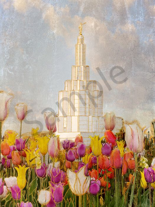 Cheery Idaho Falls Temple -   This picture, taken right before the re-dedication of the Idaho Falls temple in spring 2017, shows off the beautiful colors and flowers that surrounded it. This was the temple my husband and I were married in, it holds a special place in my heart.