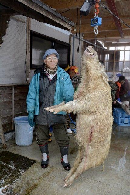 仰天!白いイノシシ 猟師の渡辺さん「感謝して食べる」