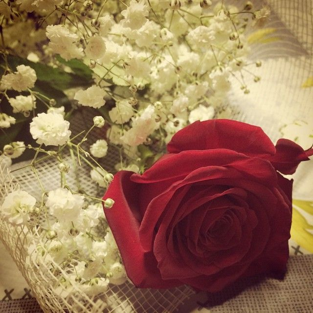 #Red #Rose for my #HappyBirthday [+28]
