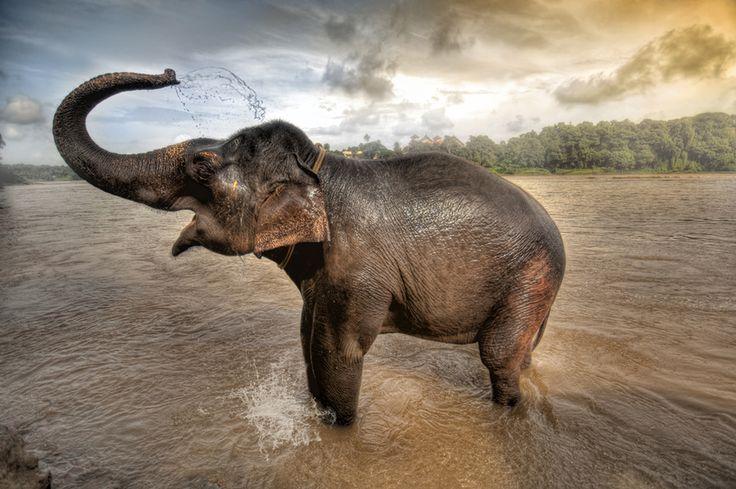 The elephant's Bath, Kerala, South India  by Ramzi  Hachicho on 500px