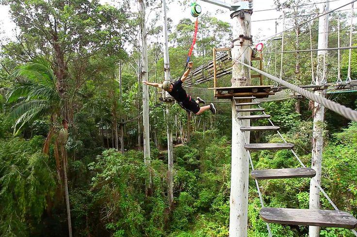 Tree Top Challenge Mt Tamborine