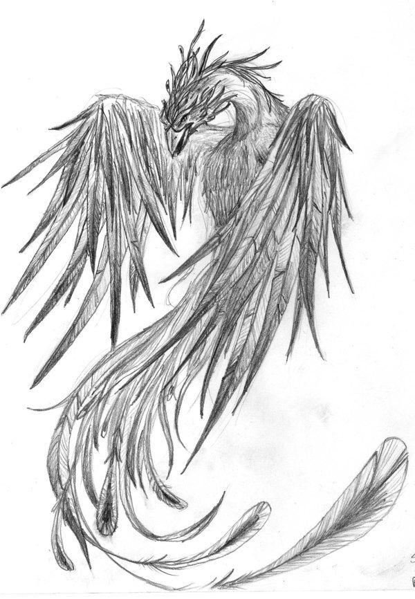 Phoenix nice line drawing