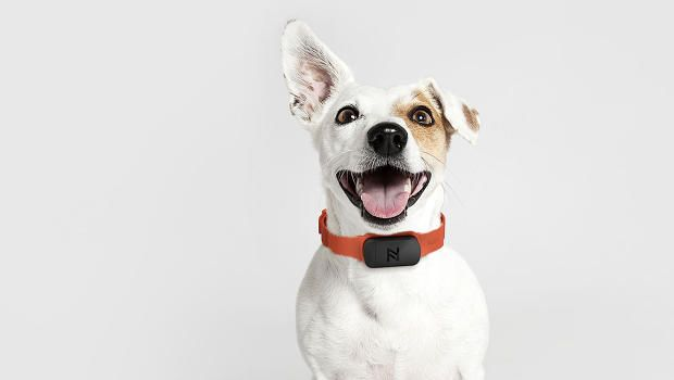 Is Nuzzle The iPod Of Pet Insurance? Ammunition Thinks So.   This smart collar insures a pet's health in more ways than one.  In America as much as 47% of all households have a dog and up to 37% have a cat. Despite this only 2% of all Americans have any form of pet insurance. Not because they don't love their pet. Not because their pet doesn't get sick. Not even because they can't afford it: on average pet insurance costs $32 a month for a dog and $22 a month for a cat. It's because most…