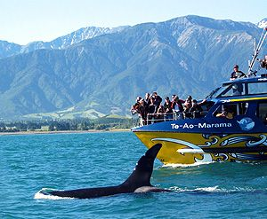 We went whale watching at Kaikoura, loved it.