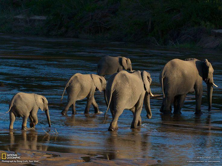 The 25  best Animal geographic ideas on Pinterest | Wild animals ...