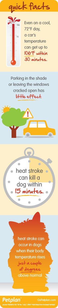 Even on a cool day, a car's internal temperature can soar to dangerous temperatures for pets!