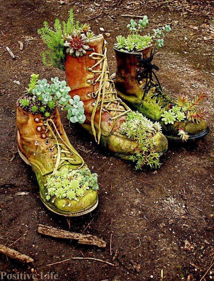 there once was a plant that lived in a shoe...