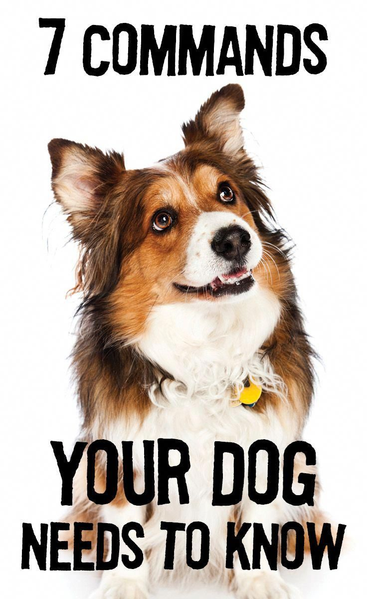 7 Commands Dogs Need To Know In Public Places Dogs Dog Behavior