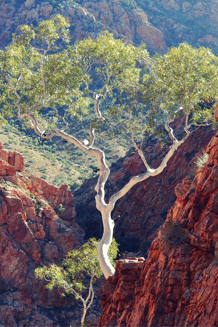 Standley Chasm: How to see the views that most tourists NEVER see. http://traveloutbackaustralia.com/standley-chasm-views-tourists-never-see.html/  Standley Chasm, West MacDonnell Ranges, Alice Springs, Northern Territory. Australia