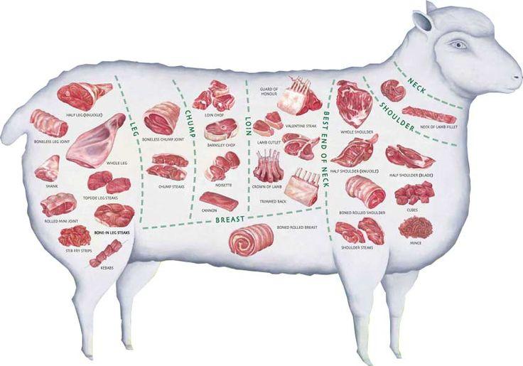 sheep primal cuts - google zoeken | design - lamb cuts ... lamb meat diagram