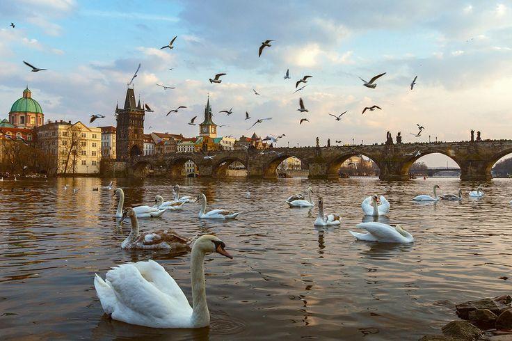 Charles Brigde, Prague by Gabor Jonas