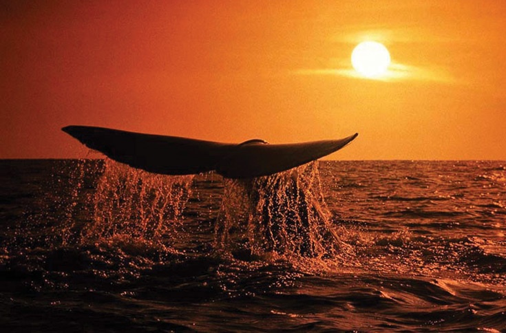 Tours to garden route - whale watching!!!  http://www.nomadtours.co.za/campingtour/garden-route-and-lesotho-north/