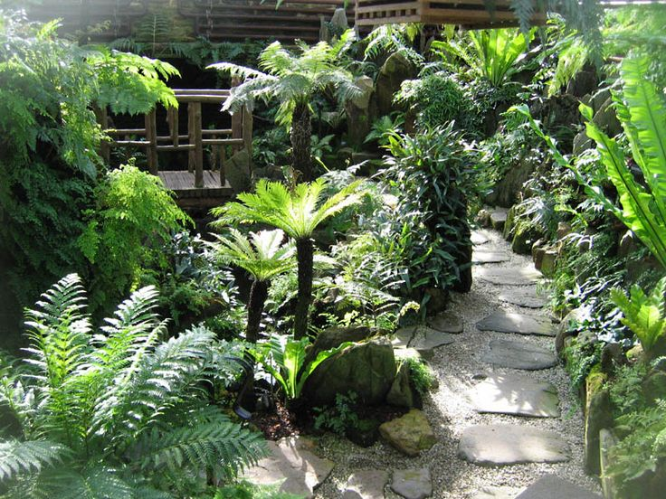 Best Fernery Ideas Images On Pinterest Ferns Native Plants