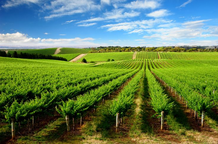Barossa Valley wine tours