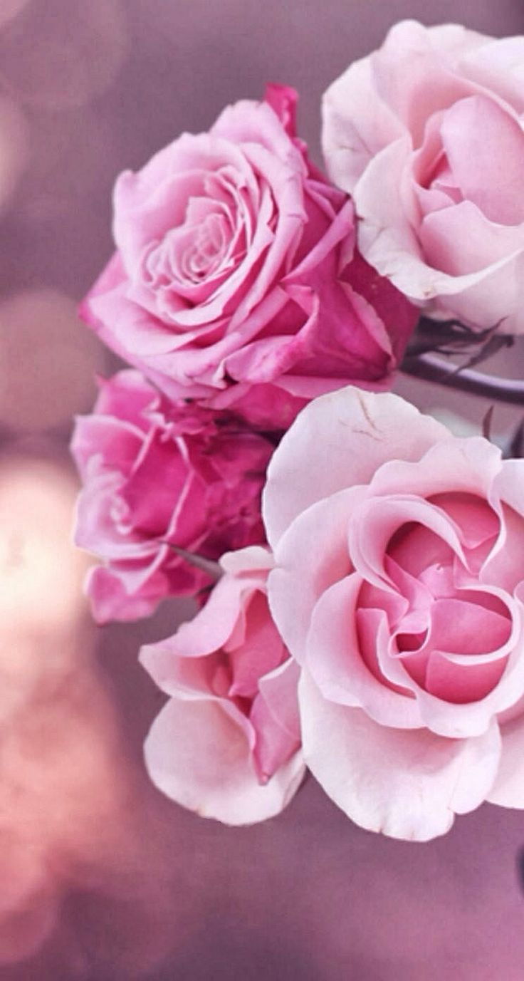 296 best images about iphone5 wallpapers on pinterest - Pink rose wallpaper iphone ...