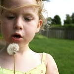 Dandelions... weeds or wishes?