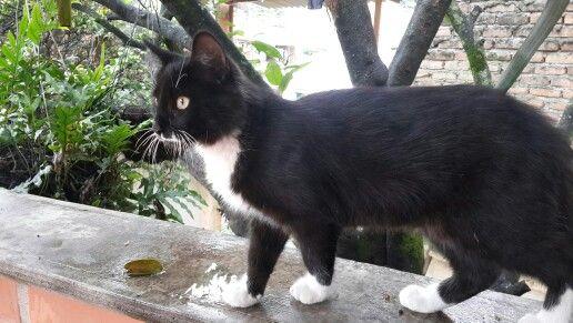 Kitty cat...