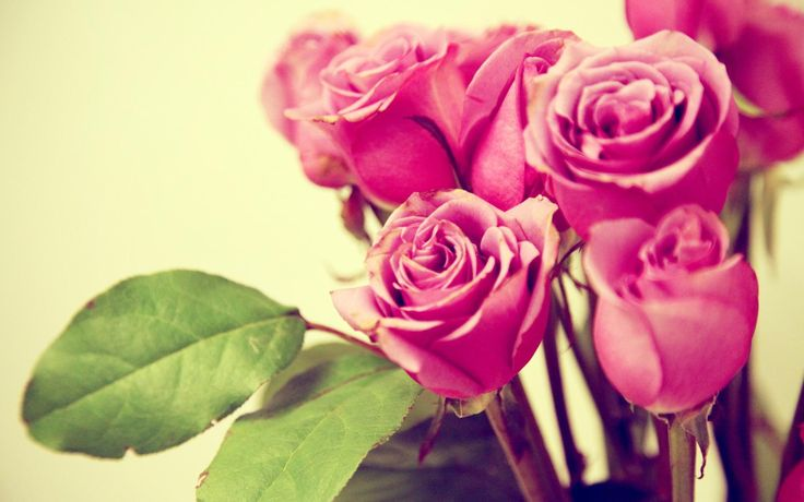 awesome grunge pink roses wallpaper