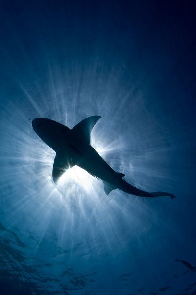 Beautiful picture of shark eclipse. Colorado Springs Pediatric Dentistry   #ColoradoSprings   #CO   http://www.cspediatricdentistry.com/