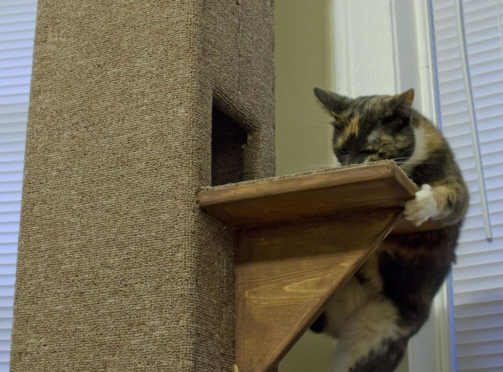 Build a Cat Tree With These Free Plans: Free Cat Tower Plan at Imgur