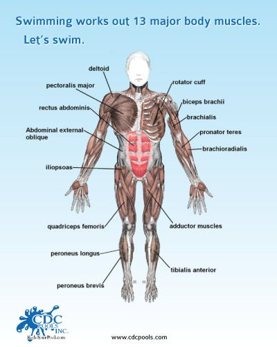 what muscles do you use to swim