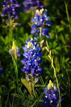 15 Tips for Wild Flower PhotographyGardens Ideas, Beautiful Flower, Photographers Wildflowers, Hummingbirds Photos, Spring Flower, Flower Inspiration, Pretty Flower, Wild Flower Photography, Wild Flowers