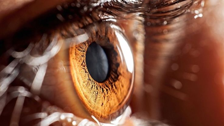 Research News: Stem cells could restore vision after eye disease. Read here https://texasstemcell.com/stem-cells-restore-vision-eye-disease/