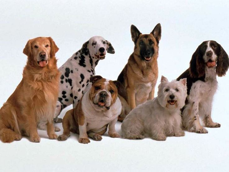 Grandorf: Корм для собак, богатый нужными элементами
