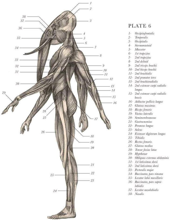 832 best Anatomy images on Pinterest | Kpop girls, Drawing reference ...