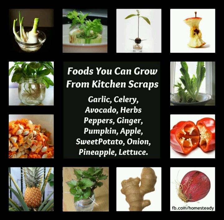 Grow Vegetables From Kitchen Scraps: Foods You Can Grow From Kitchen Scraps