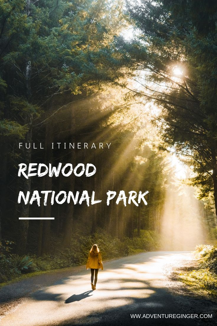 Redwood National Park: Travel Guide