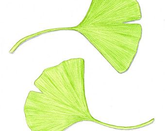 "Ginkgo Leaf Art, Spring Green Leaves Botanical Illustration, Simple Green and White Nature Decor, Watercolor Leaf Painting 10"" X 8"""