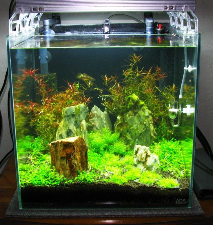 Shrimp Cube Aquarium Aquarium Pinterest Acuario Pecera Y Paisajes