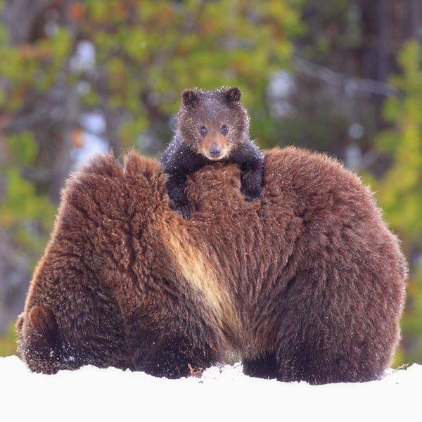 cachorro de oso marrón metro