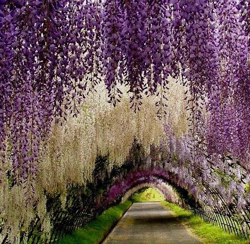 Japanese garden....