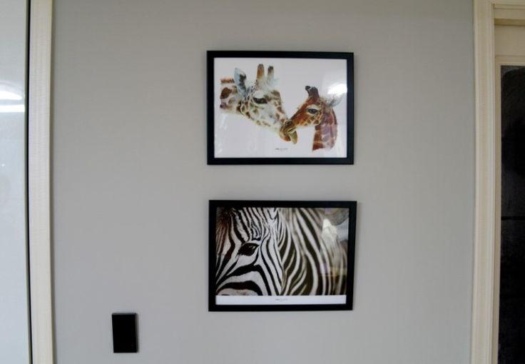 33X43 애니멀시리즈 11번과 12번입니다 귀여운 기린과 멋스러운 얼룩말 입니다 기린은 수채화로 그린 그림이고 얼룩말은 실사 사진입니다