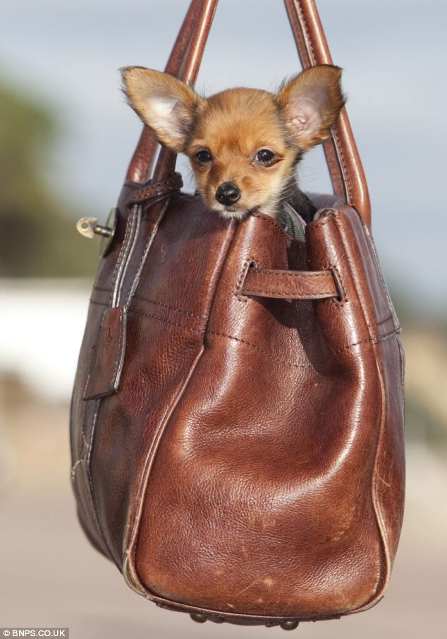 Purse Carriers - Dog Products & Accessories - Dog.com