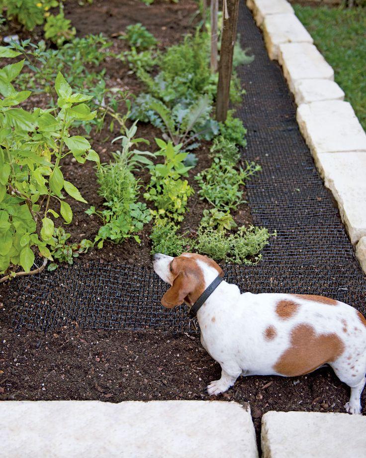 http://www.gardeners.com/buy/scat-mat-cat-deterrent-roll-78x11/8592448.html