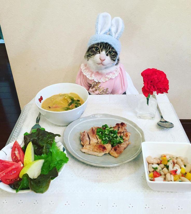Chicken saute, Boiled curry cream of Chinese cabbage and shimeji mushrooms, Marinated paprika and white beans,   #cat#cats#catstagram#catsofinstagram  #instacat_meows#instacat_models#food #sweetcatclub#にゃんすたぐらむ#ねこ#猫 #ふわもこ部#ペコねこ部#にゃんこ#サラダ #鶏肉のソテーねぎ塩ソース#パプリカと白インゲンのマリネ#白菜としめじのカレークリーム煮#カーネーション#うさぎ#mannishboys  #斉藤和義#母の日