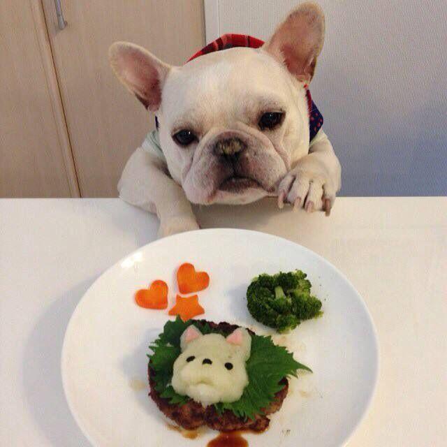 French Bulldog and Sushi❤️