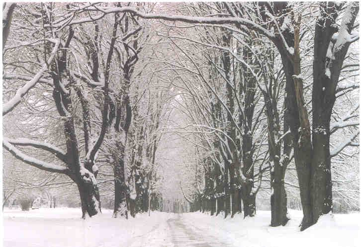 When is the first day of winter 2015? Get the solstice date and time. Plus, free winter ecards, folklore, and more!