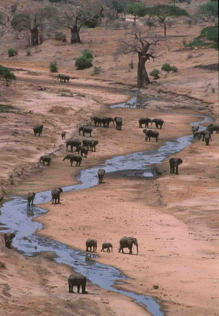 """""""Elephants, the world's largest land mammals, are under pressure in many parts of Africa from poaching, loss of habitats to farms and towns, pollution and climate change. Numbers have fallen to 470,000-685,000 against millions decades ago.""""  ~ Tanzania"""