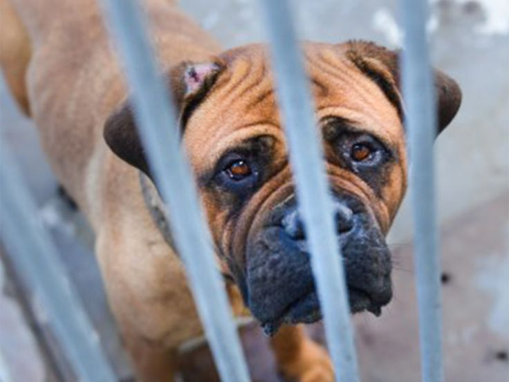 Puppy mill lobbyists are trying to pass cruel and