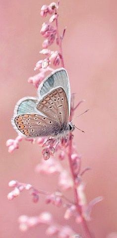 Pretty in Pink - Butterfly. Love how the wings are folded