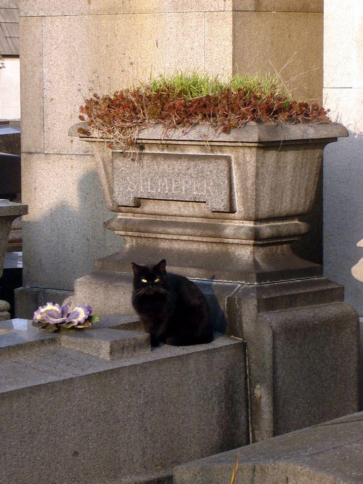 Cat__Père_Lachaise_Cemetery__041.jpg (1224×1632) Cats