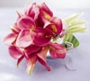 Royer's flowers & gifts: Gallery - Flowers, Plants, Gift Basket Delivery for all occasions at royers.com