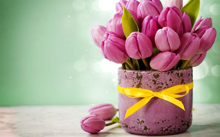 Download wallpapers pink tulips, bow, spring, 8 march, pot, tulips