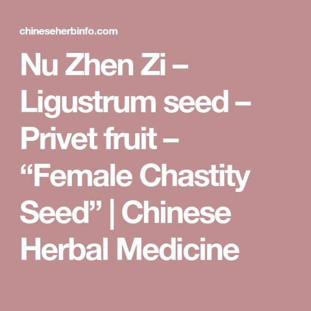 "Nu Zhen Zi – Ligustrum seed – Privet fruit – ""Female Chastity Seed"" | Chinese Herbal Medicine"