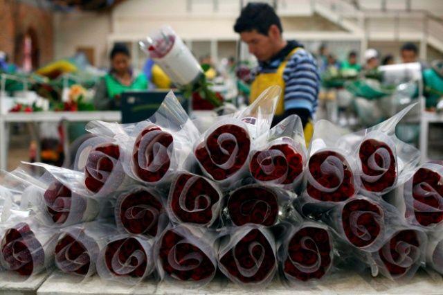 El principal destino de las flores nicaragüenses es Estados Unidos, que compra el 99.81%, según el Centro de Exportaciones e Inversiones, CEI