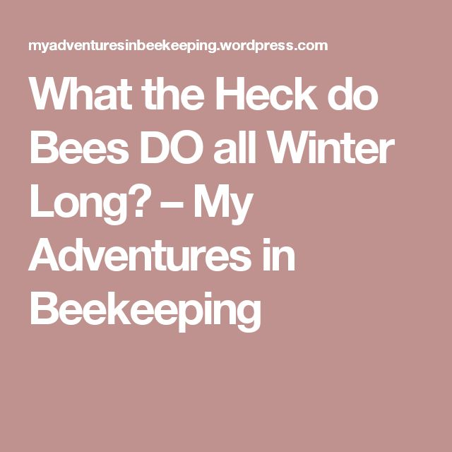 What the Heck do Bees DO all Winter Long? – My Adventures in Beekeeping